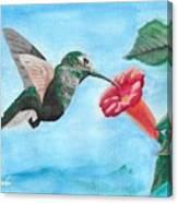 Hummingbird Trumpet Canvas Print