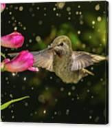 Hummingbird Visits Flowers In Raining Day Canvas Print