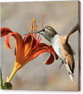 Hummingbird Whisper  Canvas Print
