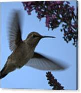 Hummingbird Wings And Butterfly Bush Canvas Print