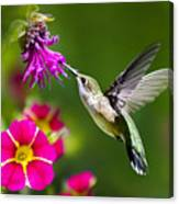 Hummingbird With Flower Canvas Print
