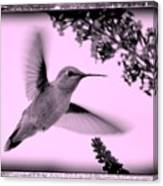 Hummingbird With Old-fashioned Frame 2  Canvas Print