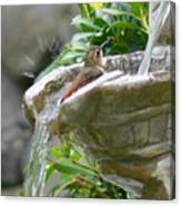 Hummingbirds Do Take Baths Canvas Print