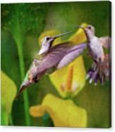 Hummingbirds In Virginia Canvas Print