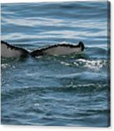 Humpback Tail Fins Canvas Print