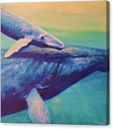 Humpback Whale And Calf Canvas Print