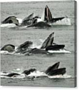 Humpback Whale Bubble-net Feeding Sequence X5 V2 Canvas Print