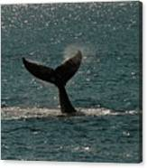 Humpback Whale Lifts Its Fluke. I Canvas Print
