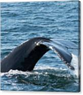 Humpback Whale Of A Tail Canvas Print