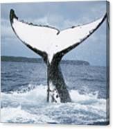 Humpback Whale Tail Tonga Canvas Print