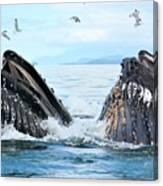 Humpback Whales In Juneau, Alaska Canvas Print