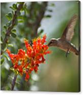 Hums With Its Mouth Full Canvas Print