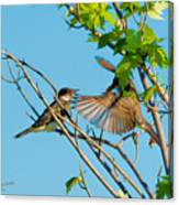 Hungry Birds In Tree Close-up Canvas Print