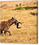 Hungry Hyena Canvas Print