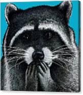 Hungry Raccoon Canvas Print