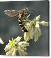 Hunter Wasp Canvas Print