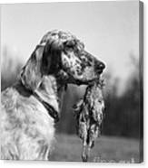 Hunting Dog With Quail, C.1920s Canvas Print