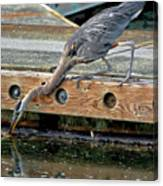 Hunting Heron Canvas Print