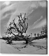 Hunting Island Beach And Driftwood Black And White Canvas Print