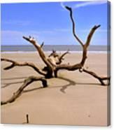 Hunting Island Beach Beaufort Sc Canvas Print