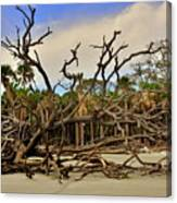 Hunting Island Driftwood Beach Beaufort Sc Canvas Print