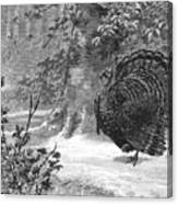 Hunting: Wild Turkey, 1886 Canvas Print
