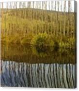 Huon Poplars Canvas Print