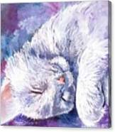 Hushabye Kitten Canvas Print