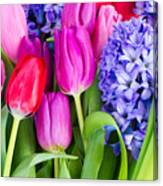Hyacinth And  Tulip Flowers Canvas Print