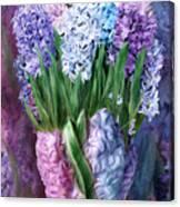 Hyacinth In Hyacinth Vase 1 Canvas Print