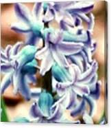 Hyacinth Photo Manipulation  Canvas Print