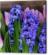 Hyacinths And Tulips II Canvas Print