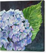 Hydrangea And Water Droplet Canvas Print