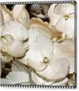 Hydrangea Blossom Framed Canvas Print
