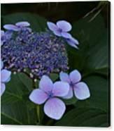 Hydrangea Blue In The Garden Xii Canvas Print