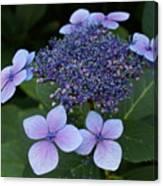 Hydrangea Blue Xi Canvas Print