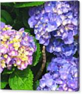 Hydrangea Blues Canvas Print