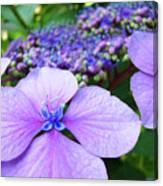 Hydrangea Flowers Art Prints Hydrangea Garden Giclee Art Prints Baslee Troutman Canvas Print