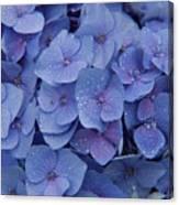 Hydrangea Flowers Canvas Print