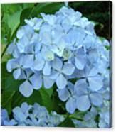 Hydrangea Garden Art Prints Hydrangeas Flower Garden Baslee Troutman Canvas Print