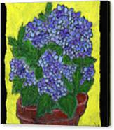 Hydrangea In A Pot Canvas Print
