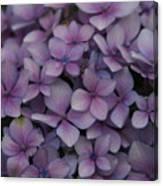 Hydrangea In Lavender 1 Canvas Print
