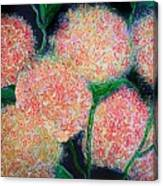 Hydrangea Inspiration Canvas Print