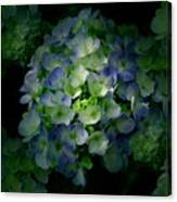 Hydrangea - Flowers Canvas Print