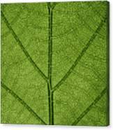 Hydrangea Leaf Canvas Print