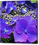 Hydrangea Plant Canvas Print