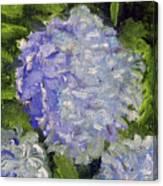 Hydrangea Time Canvas Print