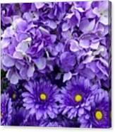 Hydrangeas And Daisies So Purple Canvas Print