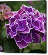 Hydrangeas In The Summer Canvas Print
