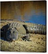 I Am Gator, No. 60 Canvas Print